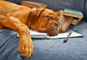 dog_sleeping_after_studying