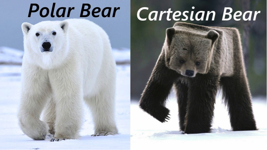 polar bear cartesian bear